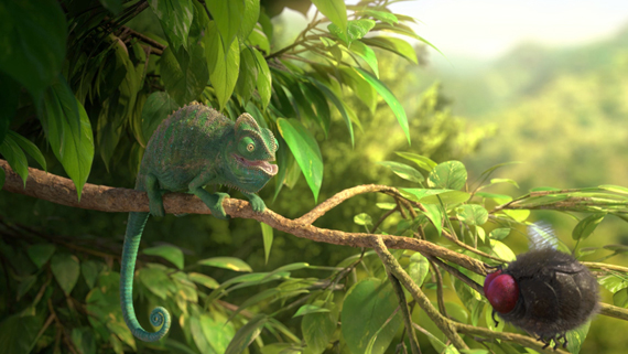 Our Wonderful Nature The Common Chameleon HYB